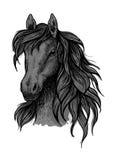 Black horse head sketch portrait. Black horse portrait. Stallion proudly looking down with long strands of wavy mane. Artistic vector sketch portrait Vector Illustration