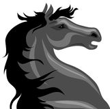 Black horse Royalty Free Stock Photo