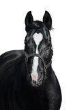 Black horse with heart mark on white background. Unigue colored. Black horse with heart mark. Unigue and rare colored. Isolated on white Stock Image