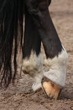 Horse hoofs with horseshoe close up Royalty Free Stock Photo