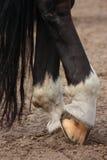 Horse hoofs with horseshoe close up. Black horse hoofs with horseshoe close up Royalty Free Stock Photo