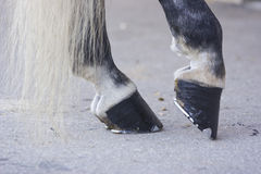Black horse hooves. Gray horse back legs black hooves and tail Royalty Free Stock Photos