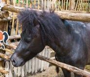 Black horse i Royalty Free Stock Photography