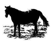 Black horse isolated on white. Vectorial image. Black horse on a grass isolated on a white background. Silhouette vectorial image royalty free illustration