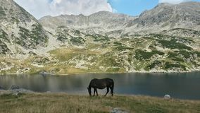 Black horse by the lake Royalty Free Stock Photography