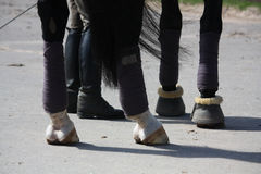 Black horse legs and rider legs Stock Photos