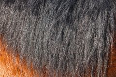 Black horse mane in the sun close-up. Can be used as a texture for decoration stock images
