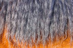 Black horse mane in the sun close-up. Can be used as a texture for decoration stock photo