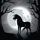 Black horse in the moonlight Royalty Free Stock Photography