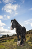 Black horse at the mountain Stock Image