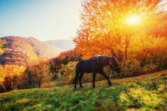 Black horse in mountains. Carpathians. Ukraine, Europe. Black horse in mountains. Fantastic sunset and fog in the distance. Carpathians. Ukraine Europe Stock Photography