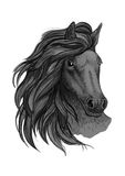 Black horse with passionate glance portrait. Beautiful mustang with wavy mane and bent head Stock Photos
