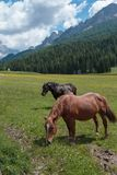 Brown Horses Pasturing in Grazing Lands: Italian Dolomites Alps Scenery Royalty Free Stock Photography