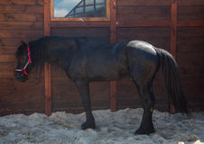 Black horse. Photo of black horse on a background of a farm Royalty Free Stock Images