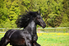 Black horse portrait in autumn background royalty free stock image