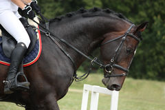 Black horse portrait during competition. In summer Royalty Free Stock Image