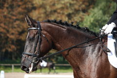 Black horse portrait during dressage competition. Black beautiful horse portrait during dressage competition Royalty Free Stock Photos