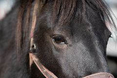 Black horse portrait up close royalty free stock photos