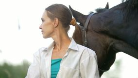 Black horse pushes the woman`s back outdoors. Close up stock footage