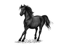 Black horse racing in gallop. Black beautiful horse racing in gallop gait. Strong raven stallion running in freedom. Vector pencil sketch portrait of racehorse royalty free illustration