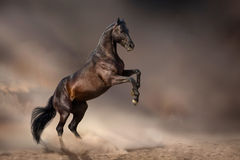 Black horse rearing up Royalty Free Stock Image
