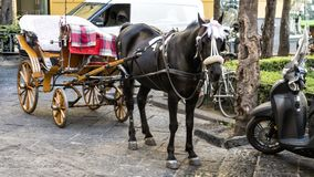 A black horse resting between buggy rides in Piazza Tasso, Sorrento, Italy. Pictured is a black horse resting between buggy rides in Piazza Tasso, Sorrento Stock Photography