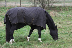 Black Horse With Rug Royalty Free Stock Photos