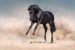 Black horse run Stock Image