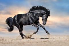 Black horse run Royalty Free Stock Images