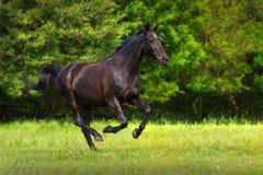 Black horse run Stock Photo