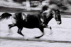 Black horse running Stock Photos