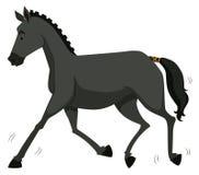 Black horse running alone Royalty Free Stock Image