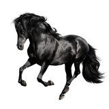 Black horse runs gallop isolated on white. Black andalusian horse (pura raza espanola) runs gallop isolated on white background Stock Photos