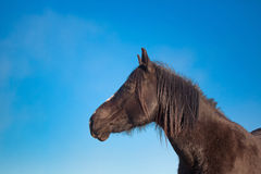 Black horse shoulder image Royalty Free Stock Photography