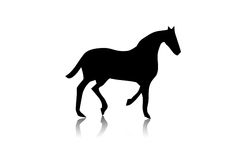 Black horse silhouette Stock Photo