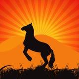 Black Horse Silhouette Vector Illustration Stock Photo