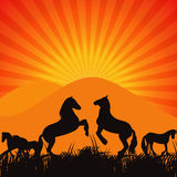Black Horse Silhouette Vector Illustration Stock Photography