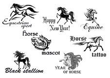 Black horse stallions mascots Stock Photography