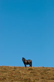 Black horse. Standing in a meadow Royalty Free Stock Photo