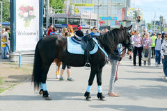 Black horse stands on street Royalty Free Stock Photos