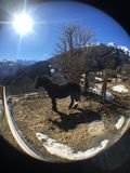Black horse, sun and mountains. Black horse, blue sky, sun, snow, beauty, freedom, space and mountains Stock Photography
