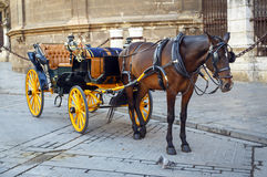 Black  horse and traditional tourist carriage in Sevilla. In front of the Cathedral. Black  horse and traditional tourist carriage in Sevilla Stock Photography