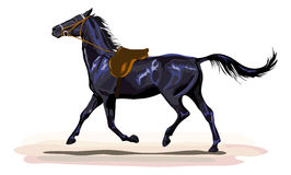 Black horse trotting with saddle Royalty Free Stock Images