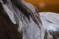 Black horse washing Royalty Free Stock Images
