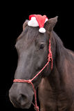 Black horse wearing santa hat Stock Photography