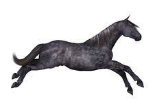 Black Horse on White Royalty Free Stock Photography
