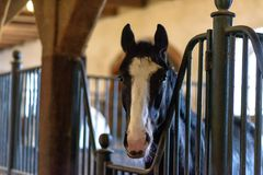 Horse in a stable on a farm in eastern Poland Stock Images