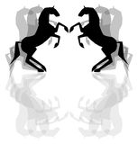 Black horses Royalty Free Stock Photography
