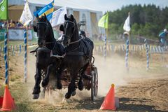 Black horses and carriage on finish line at the horse track. Horse contest with carriage on sunny day. This is a regional contest in Covasna County, starting Stock Photos