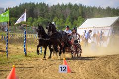 Black horses with riders and carriage on finish line at the horse track. Horse contest with carriage on sunny day. This is a regional contest in Covasna County Royalty Free Stock Photos